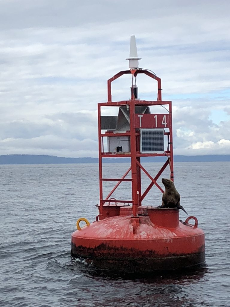 Spotting a seal on a buoy when whale watching