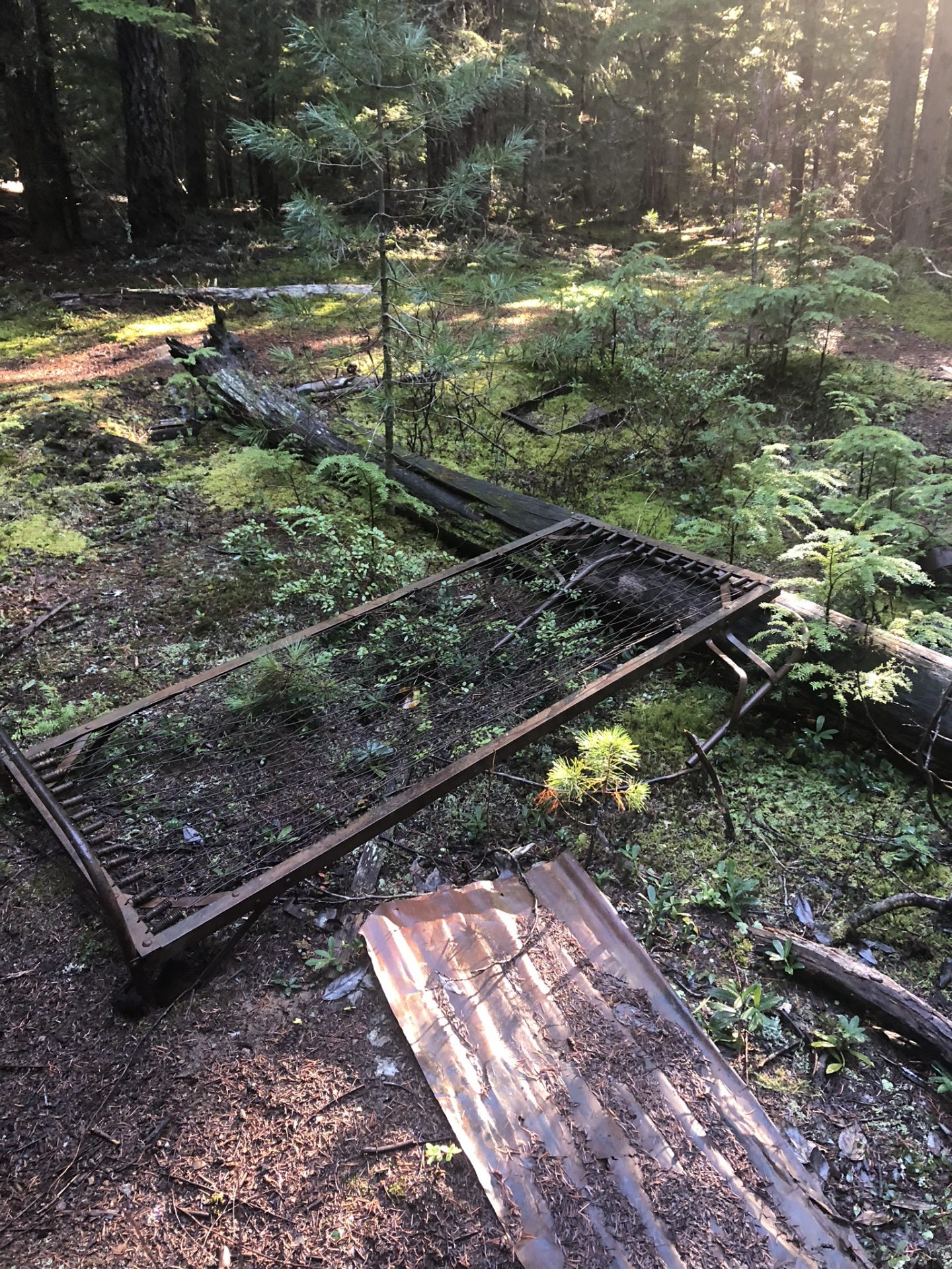 Abandoned beds at the ghost town near Whistler, Canada