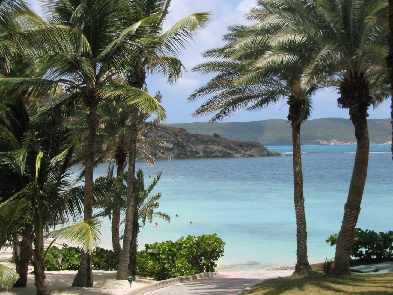 Palm trees of Antigua