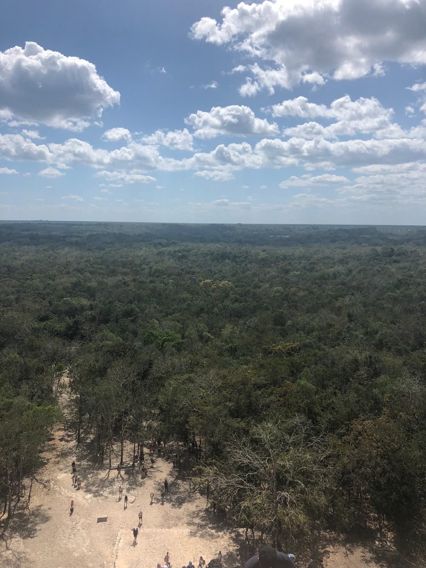 View from the top of the pyramid at Coba, Riviera Maya