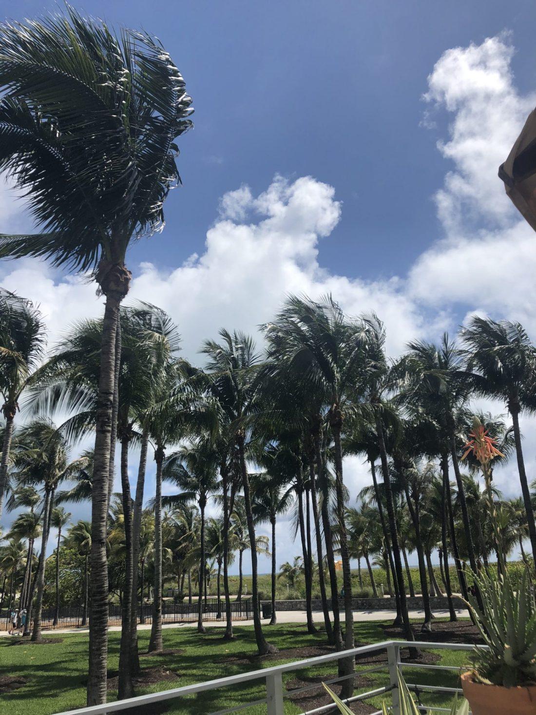 Palm trees on Miami Beach