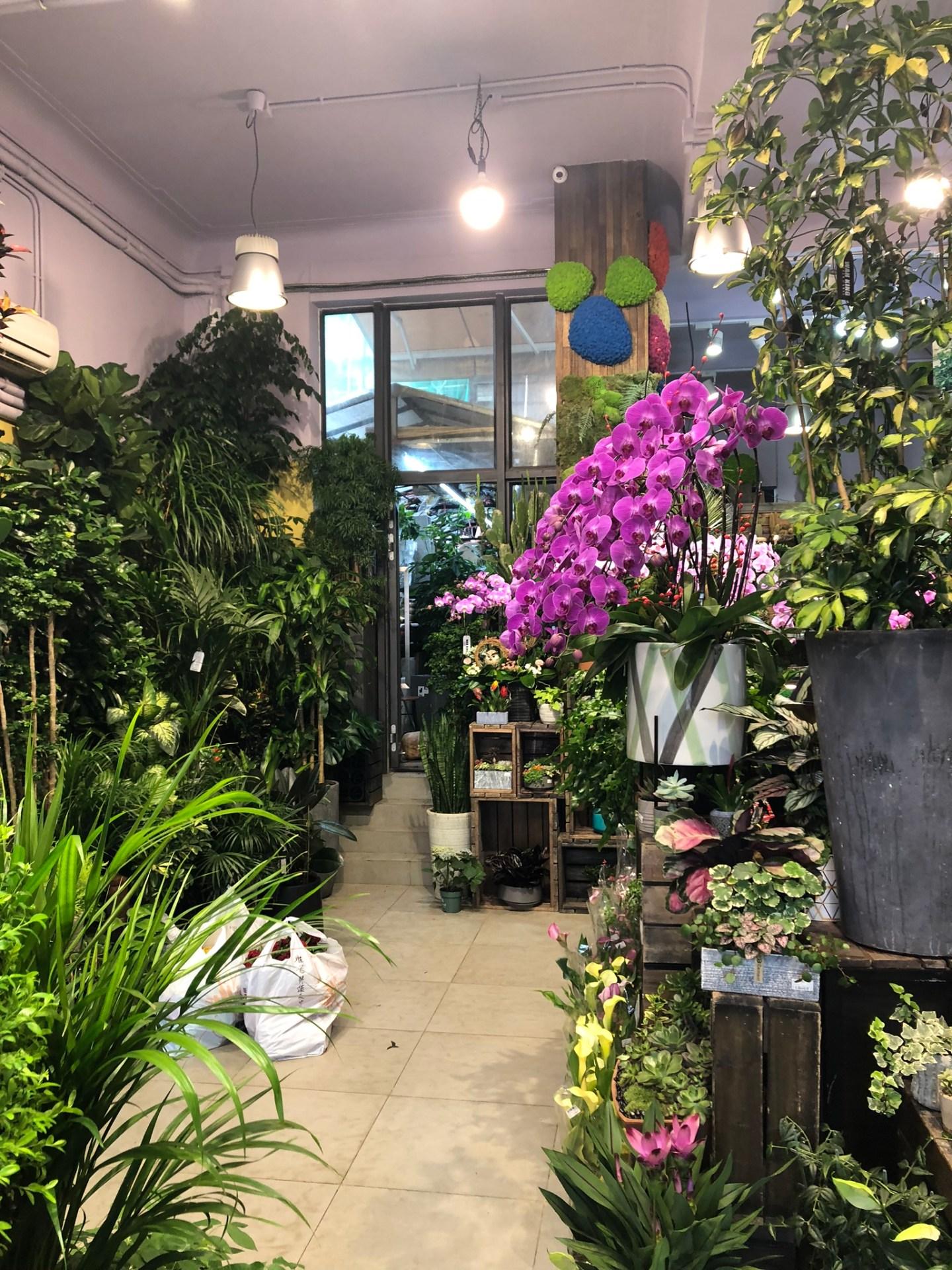 Greenery at Hong Kong Flower Market