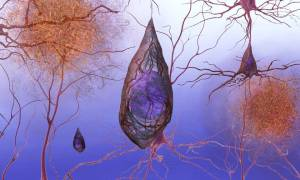 Nowa terapia powstrzymuje u myszy utratę pamięci i postęp Alzheimera
