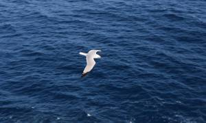 Nasze oceany warte są ok. 24 biliony dolarów. Niestety wartość ta spada.