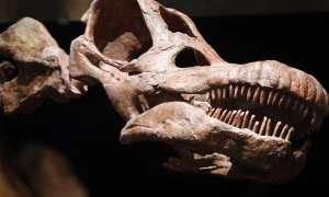 W Nowym Jorku można obejrzeć szkielet największego dinozaura na świecie