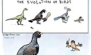 Jak zaczęły latać ptaki?