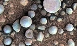 """""""Borówki"""" z Marsa nadal zadziwiają naukowców"""