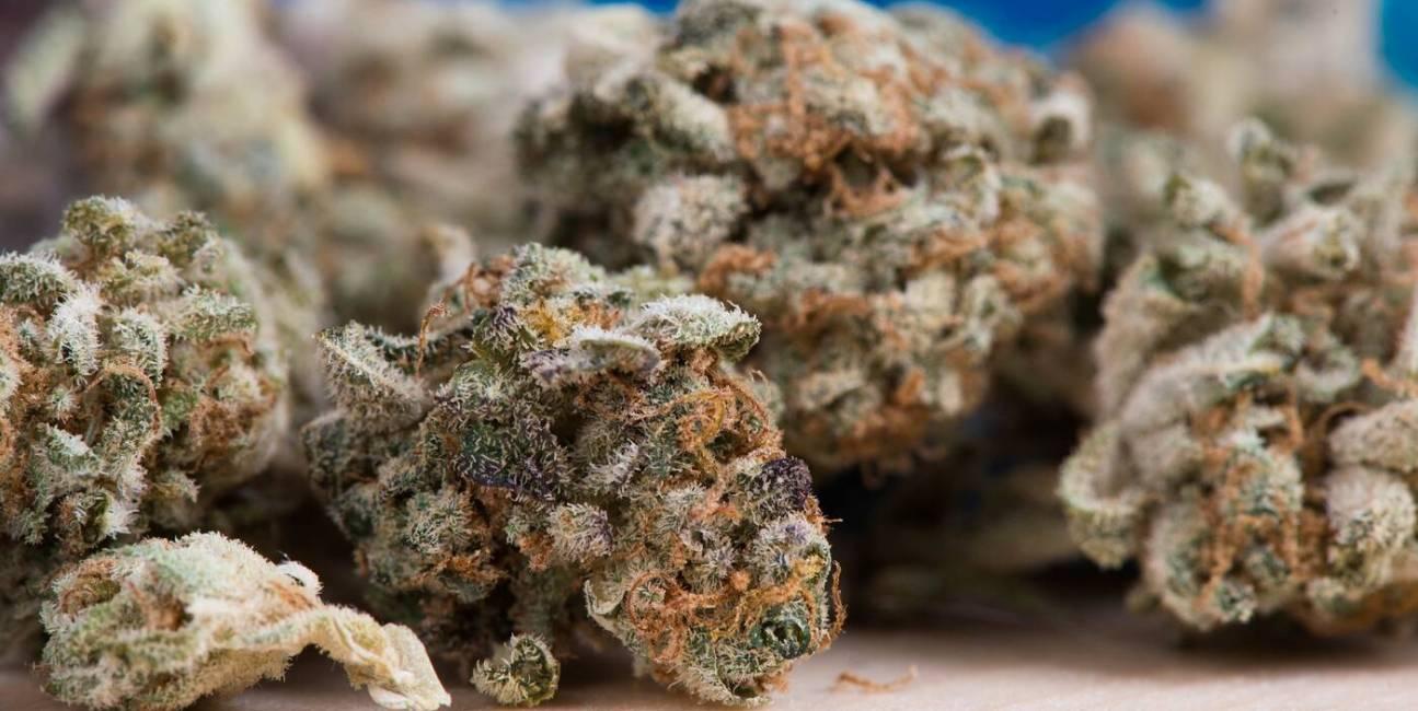marihuana, palenie marihuany, mózg marihuana, zmiany w mózgu marihuana