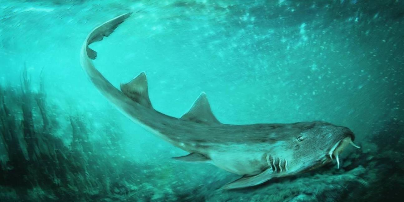 Starożytny rekin nazwany grą z 80. lat