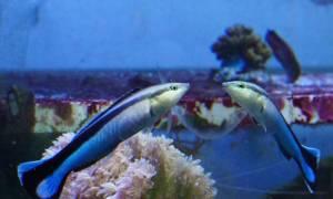 Ryba przeszła test lustra – czy to oznacza samoświadomość?