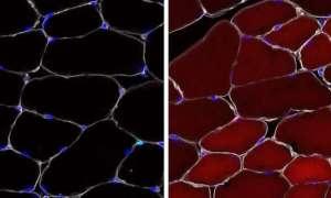 Komórki macierzyste mogą być edytowane w organizmie