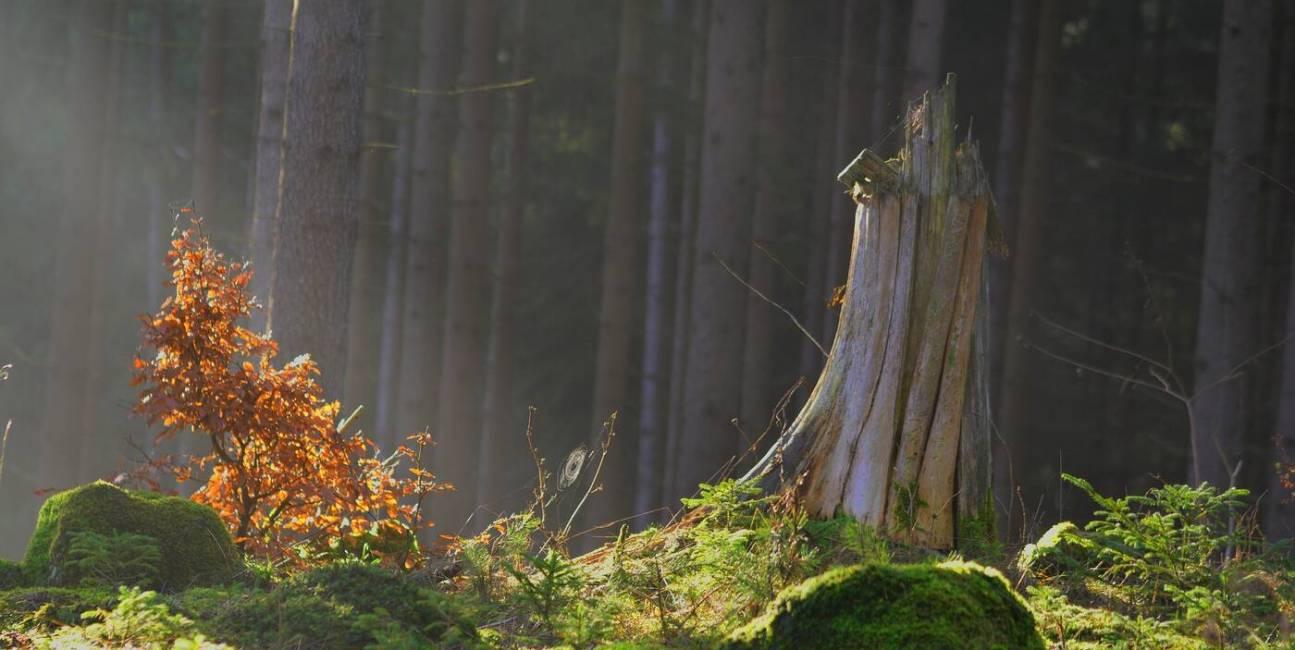 Obszary chronione świat, kurczenie się Obszarów chronionych, krajobrazy, rezerwaty