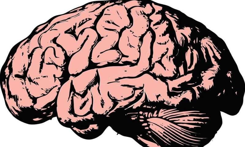 mózg, wzork, obiekty, widzenie, widzenie obiektów, odległość, mózg odległość, mózg rozmiar