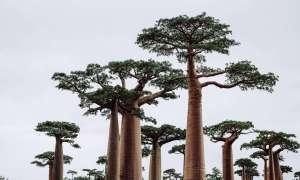 Rośliny wymierają nawet 350 razy szybciej niż w przeszłości