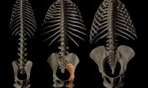 Skamielina sprzed 10 mln lat ujawnia informacje dotyczące ewolucji człowieka