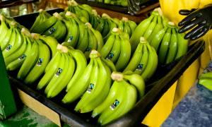 Znamy wpływ zmian klimatu na zbiory bananów