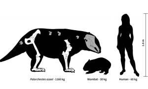 W przeszłości Australię zamieszkiwały torbacze o wadze 1000 kilogramów