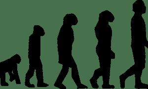 Ewolucja nie przebiega w linii prostej – dlaczego jest rozrysowana w ten sposób?
