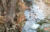 Root and Stream