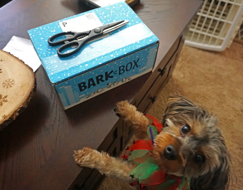 BarkBox: December
