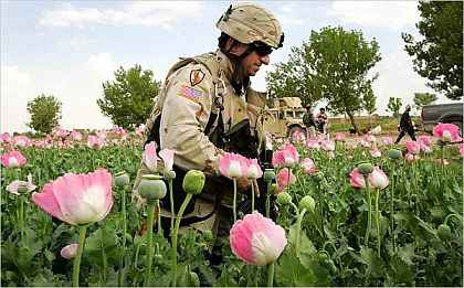 https://i1.wp.com/whatreallyhappened.com/IMAGES/afghan-opium.jpg