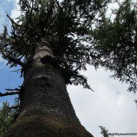 tree plea