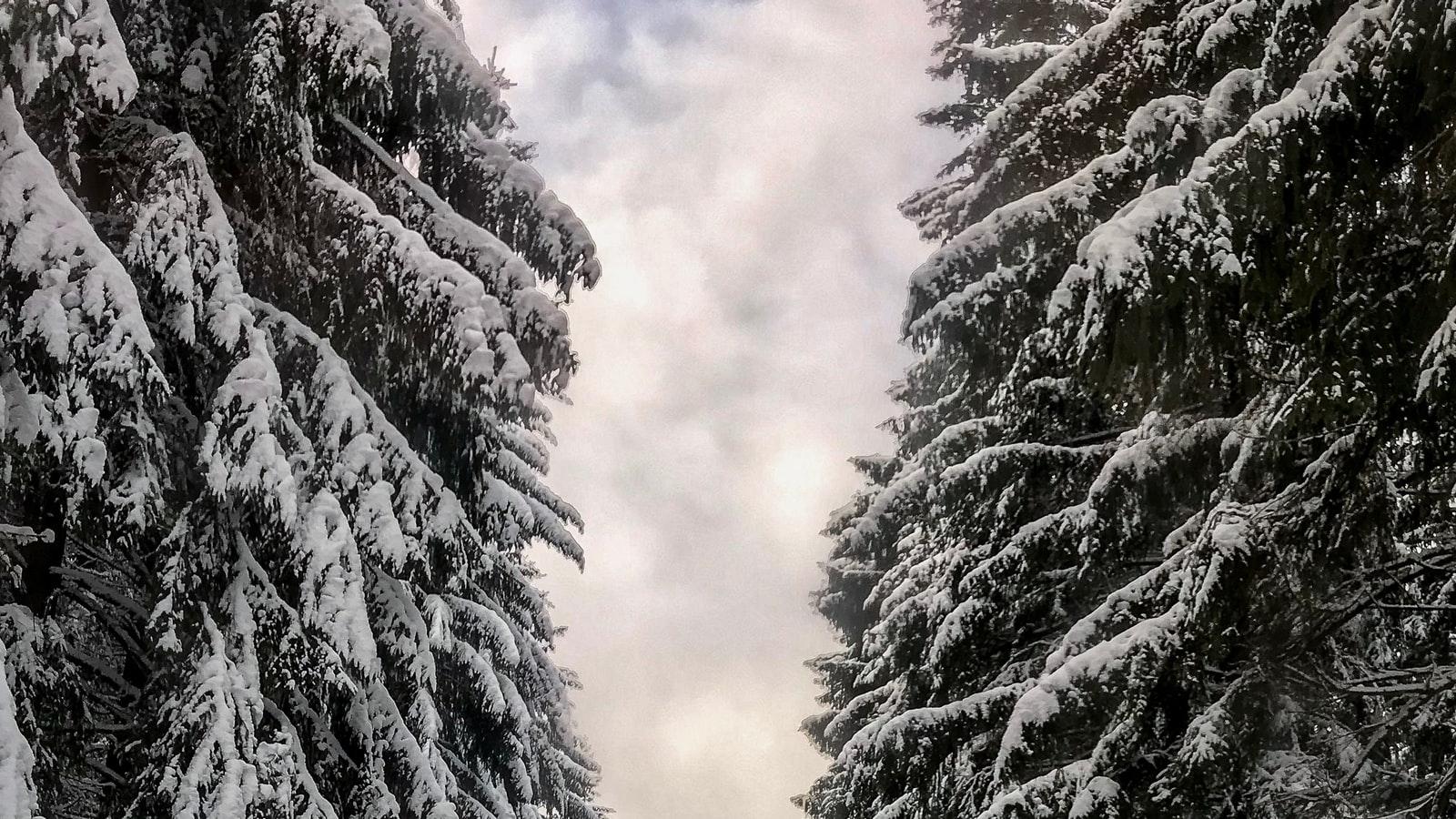 HALLOWEEN TREE CERAMIC
