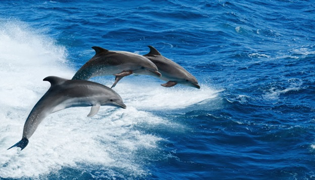 National Aquatic Animal of Pakistan
