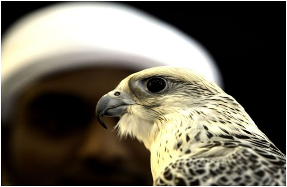 What Is The National Bird of Saudi Arabia?