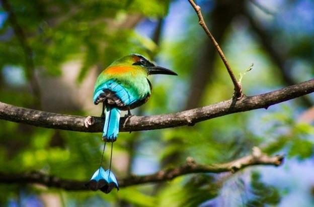 What Is The National Bird of El Salvador?