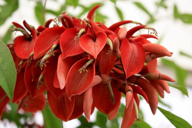 What Is The National Flower of Argentina?
