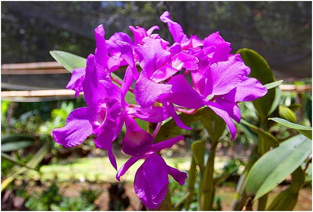 What Is The National Flower of Costa Rica?
