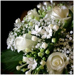 What Is The National Flower of Lebanon?