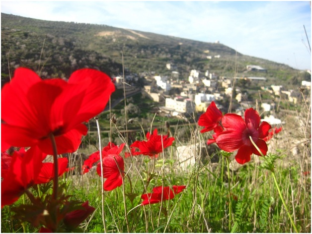 What Is The National Flower of Palestine?
