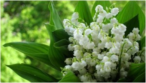 What Is The National Flower of Serbia?