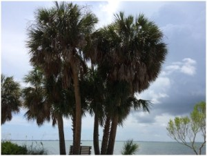 What IS The State Tree of Florida?