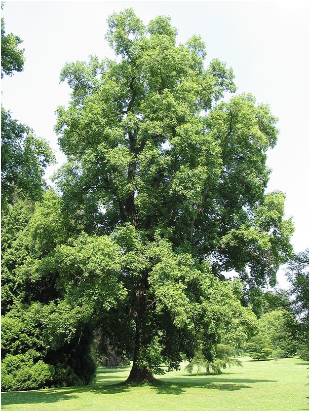 What Is The State tree of Indiana?