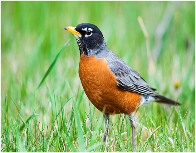 What is the Wisconsin State Bird?