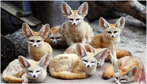 What is the National Animal of Algeria?