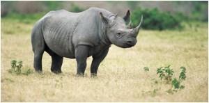 National animal of Lesotho