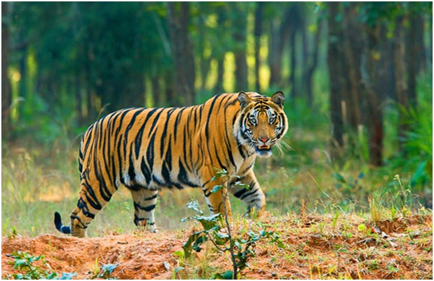 National animal of Myanmar