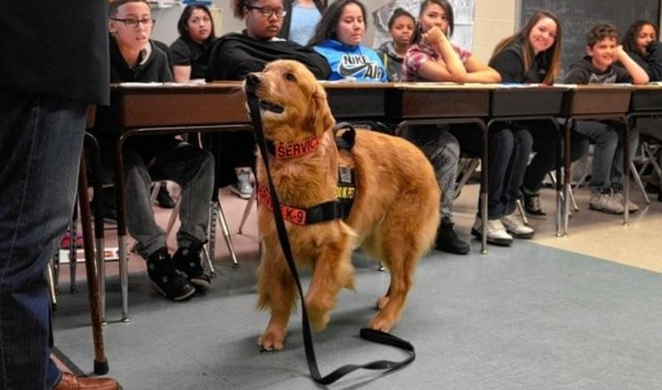 State Dog Of New York