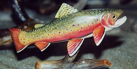 State Fish Of Virginia