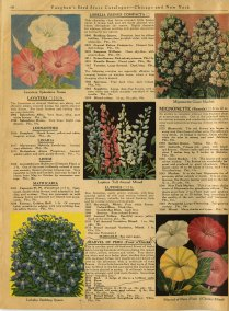 Vaughan's gardening illustrated, 1927