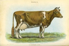 Biggle Cow Book; Old Time and Modern Cow-Lore Rectified, Concentrated and Recorded for the Benefit of Man, 1913
