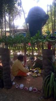 artificial-forest-created-for-republic-day-flower-show-2017-at-lalbagh-bengaluru-5