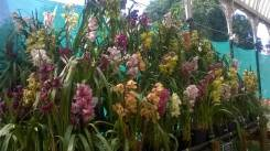 republic-day-flower-show-january-2017-at-glass-house-lalbagh-bengaluru-23