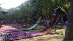 republic-day-flower-show-january-2017-at-glass-house-lalbagh-bengaluru-36