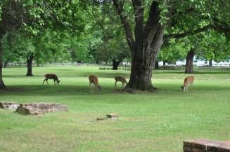 deer! super close!
