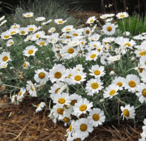 The Bonnie Gardener